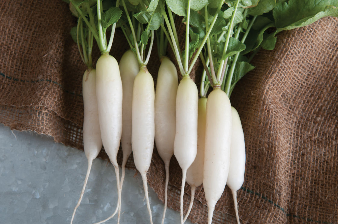 White Icicle Short Top - Radish Seed | Johnny's Selected Seeds